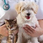 dog-cat-vet-150x150