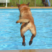 Thumbnail for Dog Swim Safety